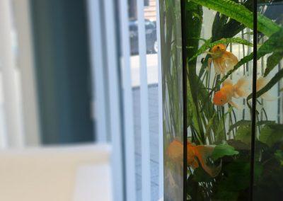 Goldfisch im Wartezimmer